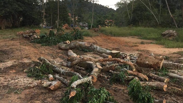Sự thật đồi lim trăm tuổi bị xẻ thịt ở Lạng Sơn