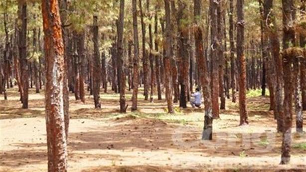Tổng Cục lâm nghiệp: Gia Lai phải thận trọng với 174ha rừng