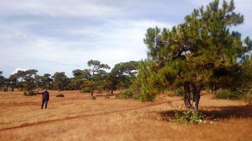 Xin chuyển hơn 174ha rừng để làm sân golf: Đừng đánh đổi