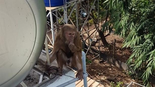 Bắt được con khỉ cướp kẹo mút của học sinh ở đâu?