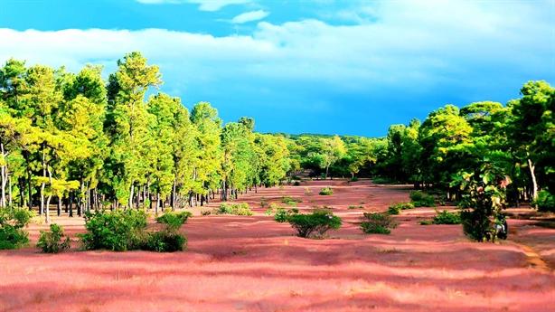 Đổi rừng lấy sân golf: Có bền được không?
