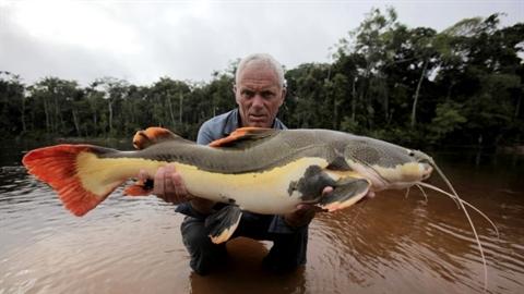 Chân dung quái vật khổng lồ gây thảm sát ở sông Amazon