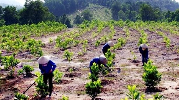 Chỉ số môi trường: Đừng nhập nhèm rừng trồng, rừng tự nhiên!