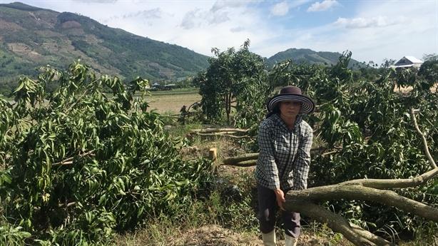 Phá 93 gốc xoài của nông dân: Lời đe dọa trước