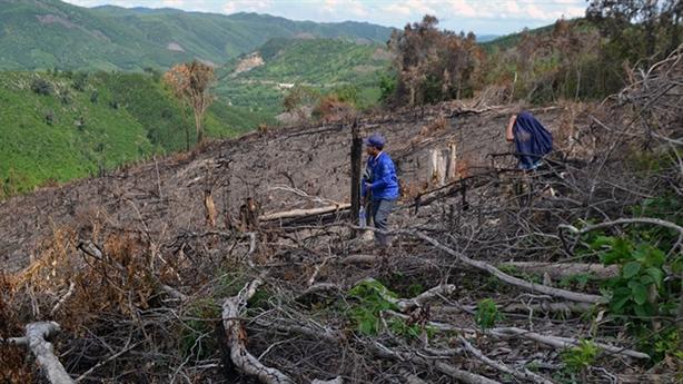6 lãnh đạo để xảy ra phá rừng: Giải thích nóng