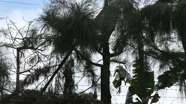Tin mới nam sinh bị điện giật chết khi cắt tỉa cây