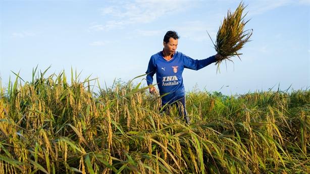 Cú bắt tay của hai ông lớn: Thêm kỳ vọng gạo Việt!