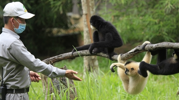 "Những ""bảo mẫu"" thầm lặng tại Vinpearl Safari"