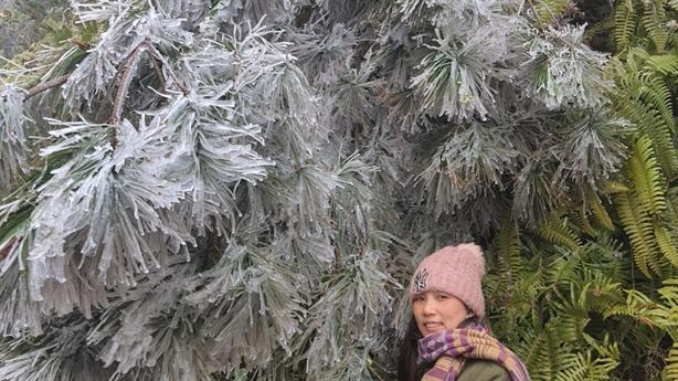 Lào Cai: Xuất hiện mưa tuyết trắng trời