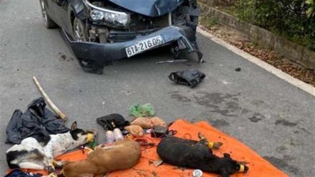 Trộm chó thấy công an, tông thẳng vào xe tuần tra