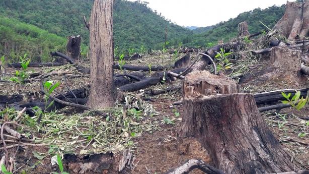 Bắt tạm giam 2 cán bộ Ban quản lý rừng phòng