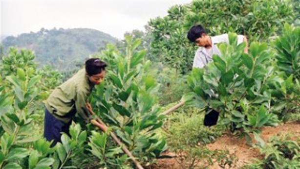 Cắc cớ trồng rừng thay thế: Lấy diện tích bù chức năng