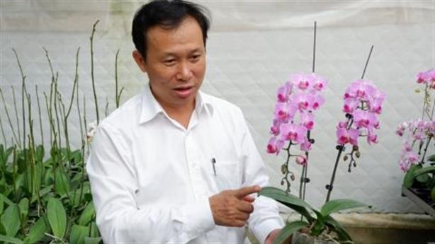 Lan công chúa từ Nhật giá tiền triệu: Việt Nam trồng nhiều