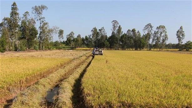 Tham vọng mới để người nông dân giàu từ lúa