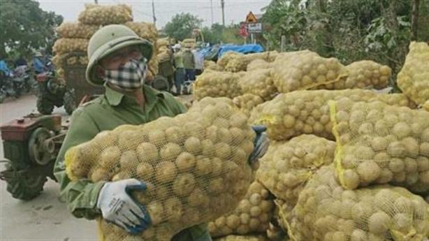 Ấm lòng những cuộc giải cứu nông sản cho dân vùng dịch