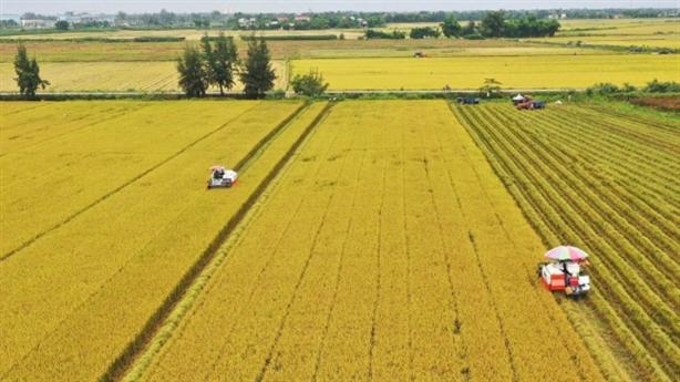 Thủ tướng duyệt cho An Giang chuyển hơn 70ha đất trồng lúa