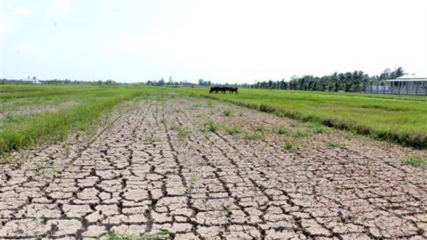 Tin buồn dòng chảy Mekong, ĐBSCL lo ngập mặn nghiêm trọng