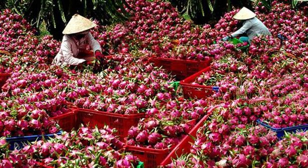 Việt Nam chưa hiểu thị trường Trung Quốc: Đường thẳng, đường tắt...