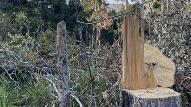 Rừng tự nhiên ở Đắk Lắk bị tàn phá: Giải thích nóng