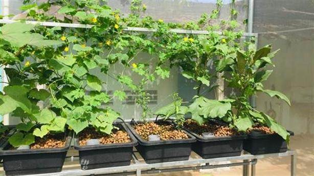 Cách trồng rau sạch đảm bảo chất lượng hàng ngày