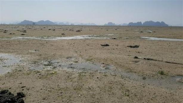 Doanh nghiệp đổ đất lấn vịnh Bái Tử Long: Hồi kết vui