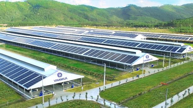 12 trang trại bò sữa của Vinamilk dùng năng lượng mặt trời