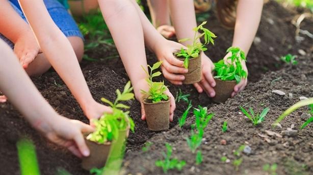 Trồng 1 tỷ cây xanh: Trồng cây nào sống cây ấy...