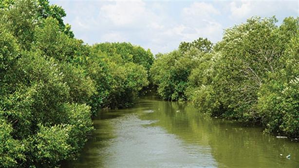 Giữ rừng ngập mặn giữa TP Phan Thiết: Điều đúng đắn
