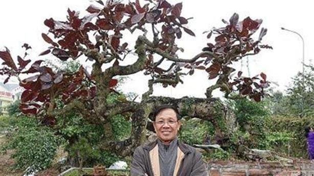 Vườn cây ông Phan Văn Vĩnh, vài năm nữa có giá?