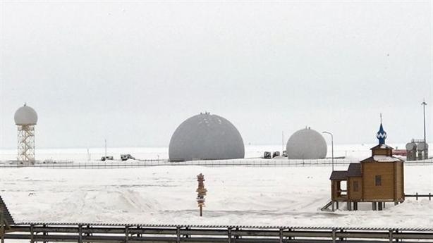 'Cỏ ba lá Bắc Cực'