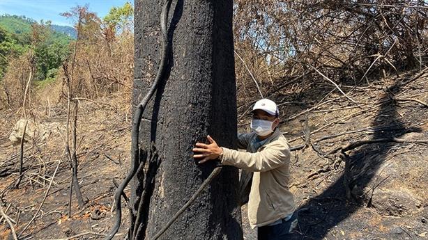 Đốt thực bì đốt cả rừng tự nhiên: Đang kiểm tra