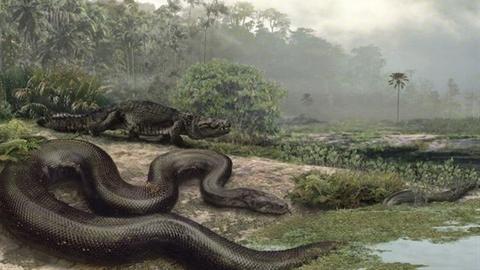 Loài quái vật khổng lồ vẫn đang sống trong rừng Amazon?