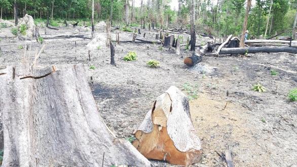 Gia Lai mất 9.600 ha rừng trong 4 năm: 'Xử lý nghiêm'