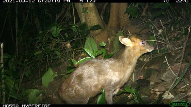 Việt Nam phát hiện loài mang cực kỳ quý hiếm tại TT-Huế