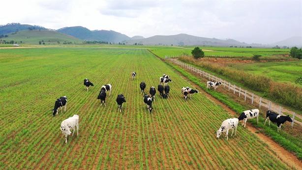 """Siêu trang trại Vinamilk tại Lào sẽ """"cho sữa"""" đầu năm 2022"""