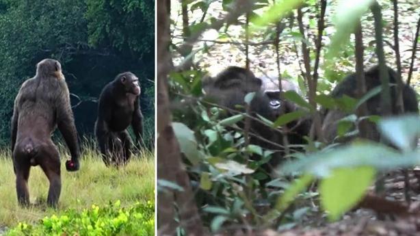Tinh tinh đại chiến khỉ đột: Câu chuyện tang tóc - x��� s��� vietlott