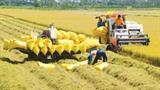 Xuất khẩu gạo và doanh nghiệp 'xù' hợp đồng gửi gạo